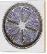 Fossil Diatom, Light Micrograph Wood Print