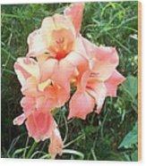 Gladiola Wood Print