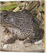 Gopher Frog Wood Print