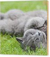 Gray Cat  Wood Print