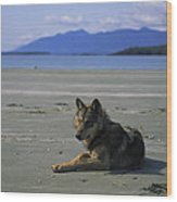 Gray Wolf On Beach Wood Print