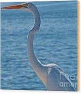 Great Egret  White Heron Wood Print