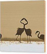 Greater Flamingo Phoenicopterus Ruber Wood Print
