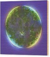 Green Alga, Light Micrograph Wood Print