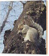 Grey Squirrel Wood Print by Georgette Douwma