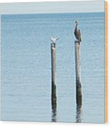 2 Gulls And A Pelican Wood Print