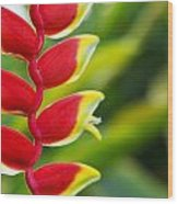 Heliconia Blossom Wood Print