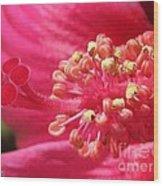 Hibiscus Named Luna Rose Wood Print