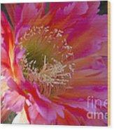 Hot Pink Cactus Flower Wood Print