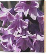 Hyacinth Named Splendid Cornelia Wood Print