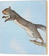 Jumping Gray Squirrel Wood Print by Ted Kinsman