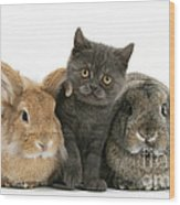 Kitten And Rabbits Wood Print