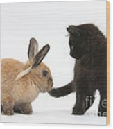 Kitten And Young Rabbit Wood Print