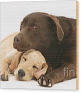 Labradoodle And Labrador Retriever Wood Print