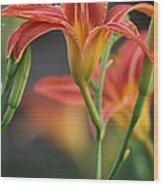 Lady Orange Lily Wood Print