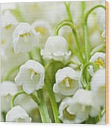 Lily-of-the-valley Flowers Wood Print