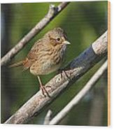 Lincolns Sparrow Wood Print