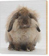 Lionhead-lop Rabbit Wood Print