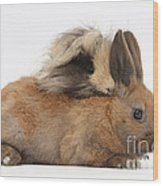 Long-haired Guinea Pig And Young Rabbit Wood Print