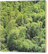 Lush Bamboo Forest Wood Print