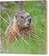Marmot Wood Print