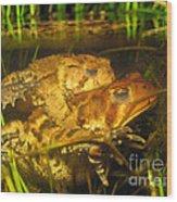 Mating Toads Wood Print
