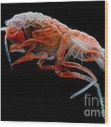 Mesopelagic Amphipod Wood Print