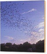 Mexican Freetail Bats Wood Print