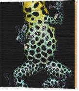 Mimic Poison Frog Wood Print