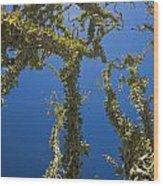 Ocotillo Fouquieria Splendens Wood Print