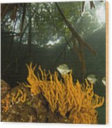 Orange Sponges Grow Wood Print