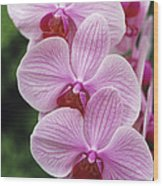 Orchid Flowers Wood Print by Duncan Smith