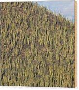 Organ Pipe Cactus Stenocereus Thurberi Wood Print