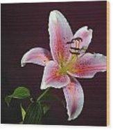 Oriental Lilly Wood Print