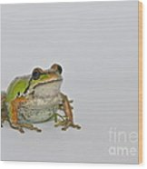 Pacific Tree Frog Wood Print