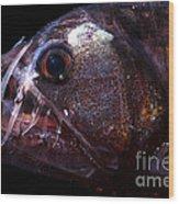 Pacific Viperfish Wood Print