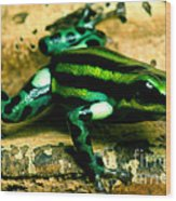 Pasco Poison Frog Wood Print