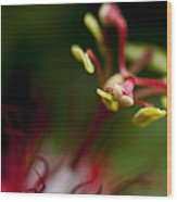 Passiflora Flower Wood Print