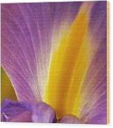 Photograph Of A Dutch Iris Wood Print