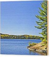 Pine Tree At Lake Shore Wood Print
