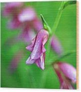 Pink Flowers Of Gladiolus Communis Wood Print