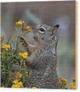 Point Lobos Park  Wood Print