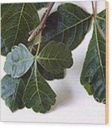 Poison Oak Branch Wood Print