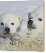 Polar Bear Ursus Maritimus Three Wood Print