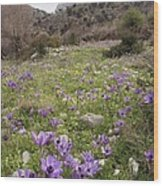 Poppy Anemone Flowers (anemone Coronaria) Wood Print