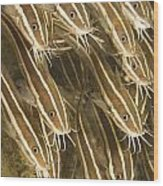 Puerto Galera, Philippines, Southeast Wood Print