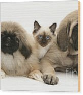 Puppies And Kitten Wood Print by Jane Burton