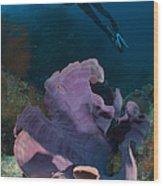 Purple Elephant Ear Sponge With Diver Wood Print