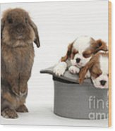 Rabbit And Spaniel Pups Wood Print