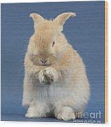 Rabbit Grooming Wood Print